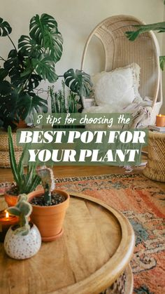 Container Plants, Container Gardening, Potted Plants, Indoor Plants, Flower Wall Backdrop, Backdrop Wedding, Plants Are Friends, House Plant Care, Decorative Planters