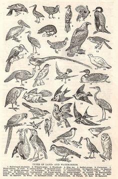 black and white Vintage Birds Hipster Tattoo, Gravure Illustration, Victorian Illustration, Sketch Tattoo Design, Art Corner, Animal Sketches, Medieval Art, Vintage Birds, Bird Prints