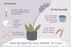 Indoor Container Gardening Orchid Care Tips for Weeks of Longevity - This is how to care for your orchids to make the bloom last longer and transition the plant into your permanent indoor flower collection. Indoor Orchid Care, Orchid Plant Care, Indoor Orchids, Orchids Garden, Indoor Flowers, Orchid Plants, Indoor Plants, How To Plant Orchids, Artificial Flowers