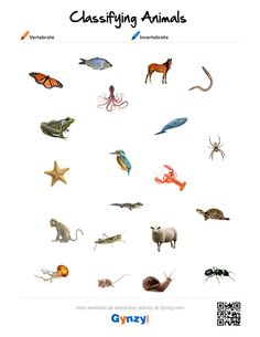 Teaching with help of the interactive whiteboard in a simple and effective way Classes Of Vertebrates, Vertebrates And Invertebrates, Classifying Animals, Family Worksheet, Science Boards, Animal Classification, Science Worksheets, Kindergarten Science, Interactive Activities