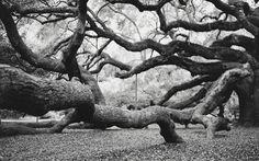 Angel Oak —John Carey