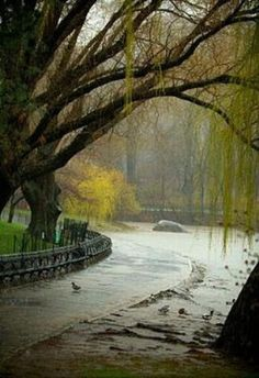 Shay Stephens took this photo, one of many. This was in Central Park New York on a record breaking rain day.  The photographer was asked to present the set on the Rachel Ray show, but we had to decline the invitation to join them. Now I can't find this photographer anywhere.