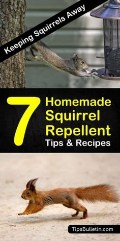 Learn how to create a homemade squirrel repellent that doesnt hurt other animals. Put the recipes to use in the garden on the plants and trees and in your yards. Squirrel Repellant, Squirrel Proof Bird Feeders, Mole Repellent, Insect Repellent, Garden Pests, Herb Garden, Garden Fencing, Garden Bed, Get Rid Of Squirrels