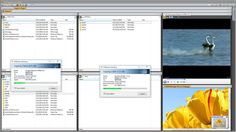 Vole Windows Expedition Professional Edition (Kampanya)