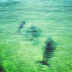 #destin #destin2013 #crabisland #dolphins