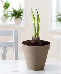 Prezzi e Sconti: #Elho loft vaso decorativo  terriccio  ad Euro 8.95 in #Bakker #Accessori vasi e fioriere elho