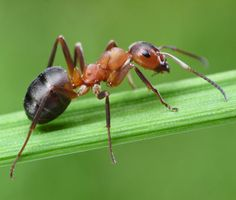 Jak se zbavit mravenců: Babské rady a tipy čtenářů