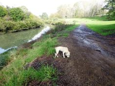 Otara Creek Walkway - a great place to walk your dog off leash and/or go for a family cycle ride. Watch out for puddles after rain....