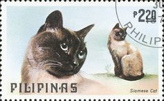 Philippines 1979 Cat and Dog Stamps Series