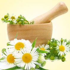 Chamomile fragrance oil is available at Nature's Garden Scents. A floral aroma of fresh chamomile flowers. You will love our wholesale fragrances. Candle Making Supplies, Soap Making Supplies, Wholesale Fragrance Oils, Soap Colorants, Clean Fragrance, Aroma Beads, Bath Gel, Candlemaking, Natural Garden