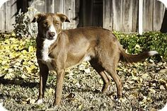 Folsom in Sacramento CountyCorning, CA - Border Collie Mix. Meet CHIP, a dog for adoption. http://www.adoptapet.com/pet/14478034-corning-california-border-collie-mix