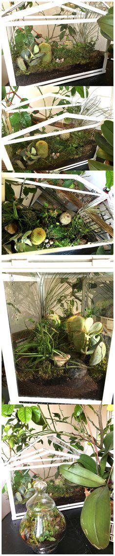 Terrarium in serra Ikea Socker con Tillandsia Terrarium insidie Ikea Socker Greenhouse With Tillandsia