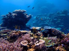 The amazing underwater landscapes of the Great Barrier Reef may soon be a relic of time past. Anthropogenic climate change overfishing and agricultural contamination are some of the biggest threats facing the reef as well as the health of the ocean worldwide. Looking forward to hearing what @brianskerry has to say for @natgeo tomorrow night  We have lingered in the chambers of the sea By sea-girls wreathed with seaweed red and brown Till human voices wake us and we drown. - T.S. Eliot…