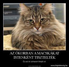 Macskás - vicces, szöveg, macskák, képek, cicák Lol, Humor, Funny, Cat Stuff, Animals, Google, Laughing So Hard, Animales, Humour