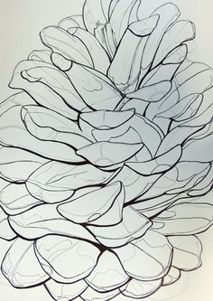 Pinecone Line drawing contour defining form through pressure of the pen nib on paper, Contour Line Drawing, Leaf Drawing, Basic Drawing, Drawing Lessons, Drawing Techniques, Painting & Drawing, Contour Drawings, Teaching Drawing, Gesture Drawing