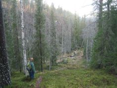 Finnish Forest Park and Service | Grandma in Lapland