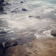 Котики😻они и в Сан-Диего котики.  One of my favorite nature spot in California. #sealife #seals #ocean #wildnature #california #shore #animals #sealion #lajolla #usa #котики #дикаяприрода #калифорния #lajollalocals #sandiegoconnection #sdlocals - posted by Musician Wife  https://www.instagram.com/liu_d_mila. See more post on La Jolla at http://LaJollaLocals.com