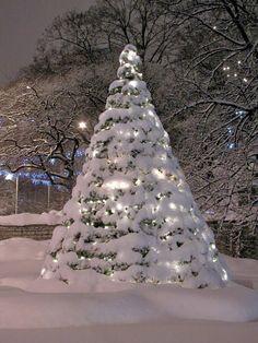 Snowy Christmas Tree photo