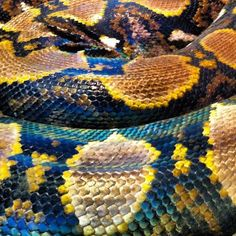 colourful snake scales Feather Pattern, Pattern Art, Textures Patterns, Print Patterns, Snake Scales, Reticulated Python, Feather Texture, Colorful Snakes, Monster Mask