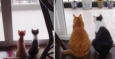 19 Before And After Photos Of Cats That Prove That They're Always Kittens At Heart