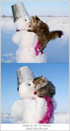 Cats love snowmen.