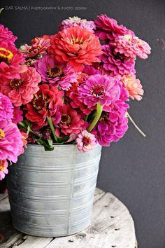 Flower Farm, Glass Vase, Flowers, Plants, Decor, Decoration, Plant, Decorating, Royal Icing Flowers