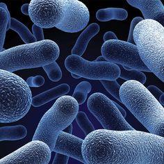 How To Choose The Best Probiotics
