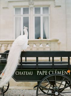 white peacock  Chateaux Papa Clement  by Peter and Veronika