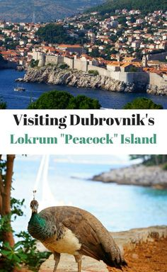 Lokrum Island - also known as Peacock Island or Lacroma Island is a perfect day trip from Dubrovnik Croatia. Game of Thrones fans won't be disappointed! Places To Travel, Travel Destinations, Lokrum Island, Rovinj Croatia, Croatia Travel, Croatia Tourism, Travel Advice, Travel Guides, Europe