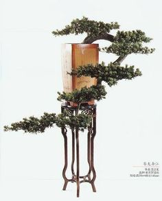 Wondering How Bonsai Trees Are Made? Modern Landscaping, Front Yard Landscaping, Ikebana, Landscape Concept, Desert Landscape, Bonsai Art, Bonsai Trees, Terrarium Plants, Miniature Trees