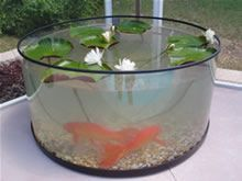 Outdoor fish indoor for winter
