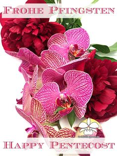 Frohe Pfingsten - Happy Pentecost! Happy Sunday Quotes, Pentecost, Christmas Wreaths, Seasons, Holiday Decor, Birthday, Flowers, Cards, Inspiration