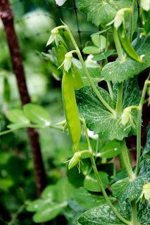Niki Jabbour - The Year Round Veggie Gardener: Kids in the Garden