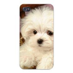 Apple Iphone Custom Case 4 4s Plastic Snap on - White Maltese Puppy Staring - Closeup