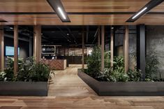 Breathe Architecture has realized a biophilic design for Slack's offices located in Melbourne, Australia. The heart of this project is about providing a