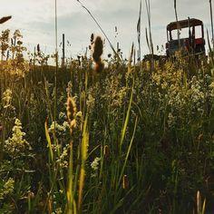 Wiesenblumen. Abendlicht. Traktor. . Körbers-Weingartengeschichten: Abendlicht im Weingarten. 🚜🌾 . . . #koerbersheuriger #heuriger #koerber #weingut #weingarten #wineyard #weinberg #perchtoldsdorferheide #thermenregion #bezirkmödling #mödling #weinliebe #eigenanbau #naturnahe #schönheitdernatur #winzer #weingut #traktor #vintage #abendlicht #schafgabe #wiesenblumen #blumenwiese #frühsommer #weinausösterreich #austrianwine #freitagabend #feierabend #goldeneslicht… Vintage, Meadow Flowers, Vine Yard, Tractor, Vintage Comics