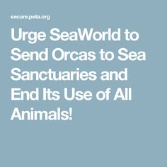 Urge SeaWorld to Send Orcas to Sea Sanctuaries and End Its Use of All Animals!
