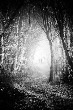 Fog Walkers in Forest Fotoprint van Rory Garforth bij AllPosters.nl