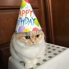 Things that make you go AWW! A place for really cute pictures and videos! Happy Birthday Cousin, Funny Happy Birthday Meme, Happy Birthday Beautiful, Cat Birthday, Birthday Ideas, Happy Birthday Icons, Cute Cat Memes, Funny Animal Memes, Funny Cats