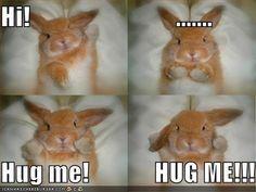 funny bunnies   funny-pictures-bunny-wants-hug