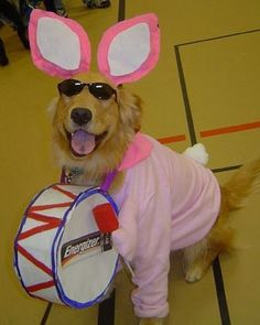Check out these spectacular dog costumes for Halloween this October Get inspired to dress up your pooch from the 20 unique costumes ranging from simple and cute to winning the dog costume contest. Comment your favorite choice of best dog costume ever! Best Dog Costumes, Pet Costumes For Dogs, Animal Halloween Costumes, Dog Halloween, Golden Retriever Halloween Costumes, Halloween Ideas, Cat Costumes, Cosplay Costumes, Energizer Bunny