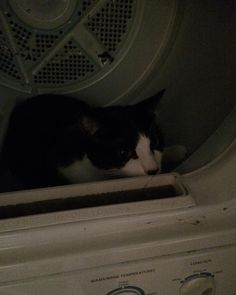 Hanging out in the dryer. #cat #cats