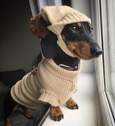 Sauve looking doggo