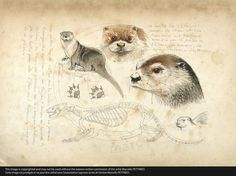 Plus cute otter art Inspiration Art, Sketchbook Inspiration, Art Sketchbook, Nature Sketch, Nature Drawing, Animal Sketches, Animal Drawings, Art Et Nature, Art Sculpture