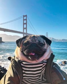 The 10 Most Famous Dogs on Instagram and Snapchat in 2018