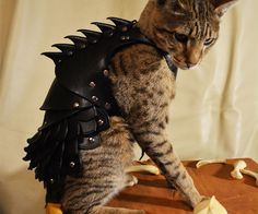 Get Mr. Fluffums ready for combat by suiting him up in the mighty cat battle armor. This specially designed leather armor is flexible so it allows your cat to...