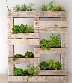My new project for the next week. Bought a new storage unit and they left the pallet.  More cooking herbs to grow.