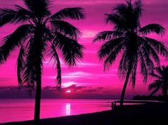Palm trees with a beautiful pink sky.
