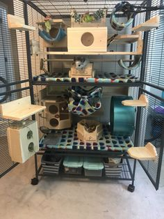 Large Hamster Cages, Pet Rat Cages, Ferret Cage, Pet Ferret, Pet Rats, Monkey Cage, Chinchilla Care, Rat Care, Rat Toys