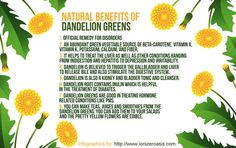 Meet the new #superfood, Dandelion Greens!